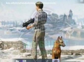 和平精英宠物猎犬获得攻略 和平精英宠物猎犬怎么获得