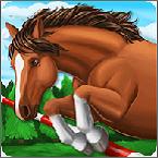 骑马越障模拟赛