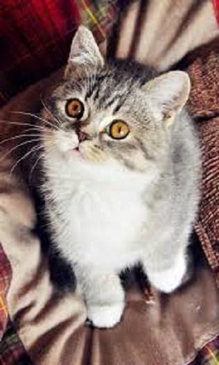 猫咪锁屏截图