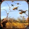 真實野鴨狩獵