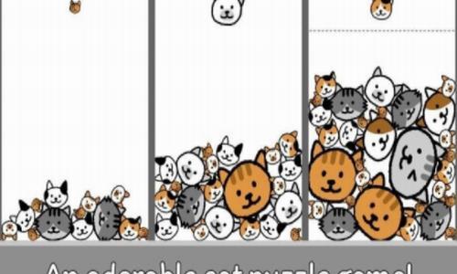 猫咪真的很爆爆